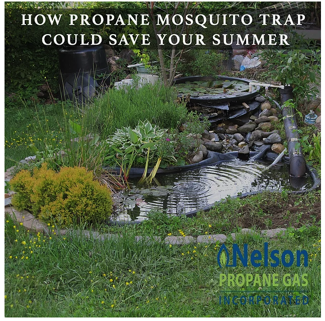 mosquito-traps-for-summer